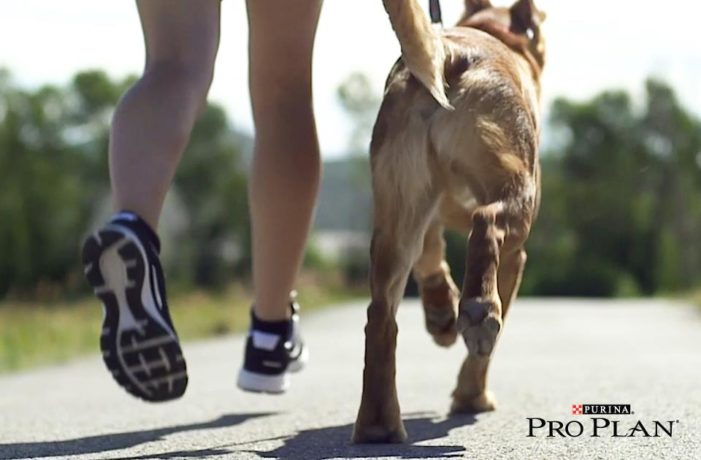 Nestlé Purina launches sports nutrition range for dogs