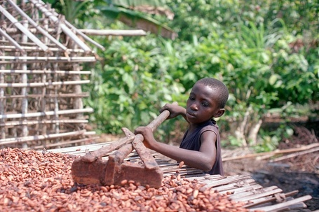 Hershey And Barry Callebaut Lag Industry In Addressing Child Labor