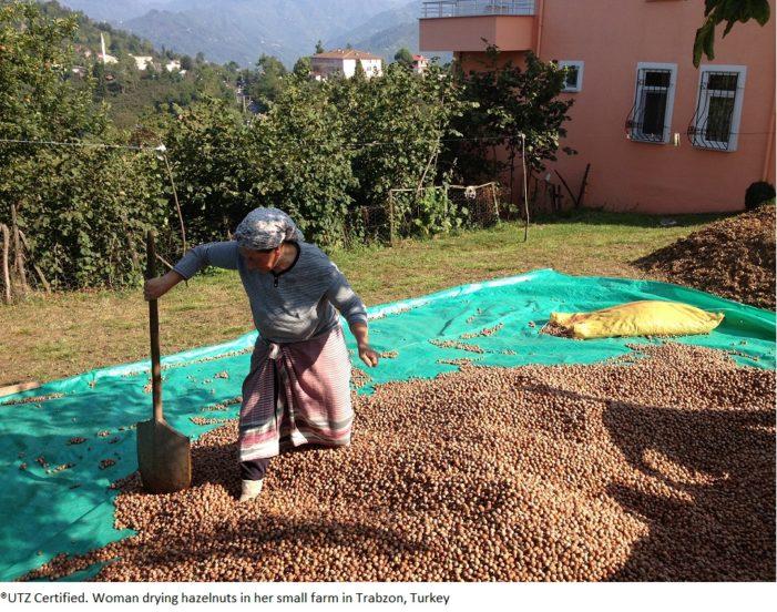 UTZ Certified Launches Sustainable Hazelnuts Farming Initiative In Turkey