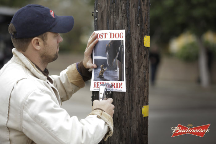 Anheuser-Busch Super Bowl XLIX Ads To Spotlight Budweiser, Bud Light