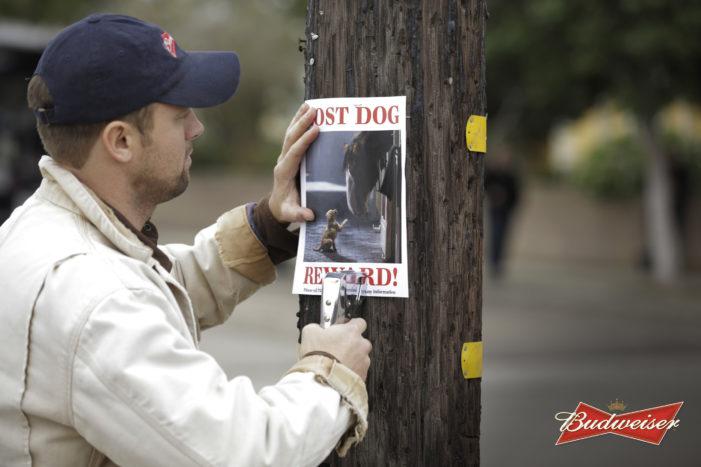 Anheuser-Busch Super Bowl XLIX Ads To Spotlight Budweiser, Bud Light