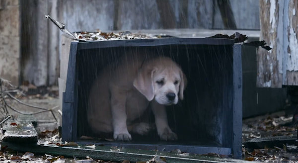 Budweiser's New Ad Continues To Elicit 'Awws' With Its Puppy-Horse Pairing