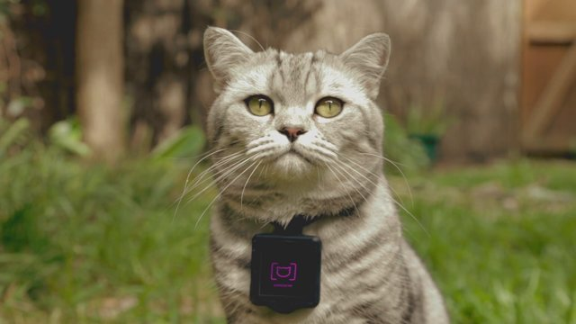 Whiskas & Clemenger BBDO Reveal the Unknown World of Cats