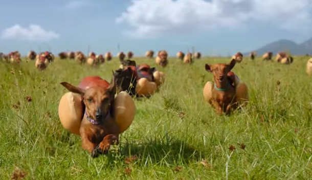 DAVID Miami's Heinz Super Bowl Ad is a Glorious Stampede of Wieners