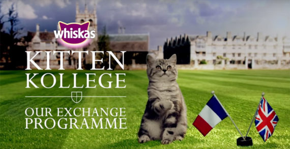 Whiskas' Kitten Kollege Launches the Cutest Exchange Programme Ever