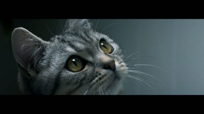 AMV BBDO Celebrates the Curiosity of Cats in Adorable New Whiskas Campaign