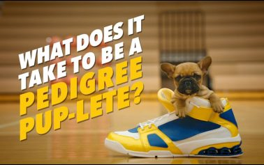 Pedigree's Adorable 'Pup-letes' Hit the Court in New Ads by BBDO New York