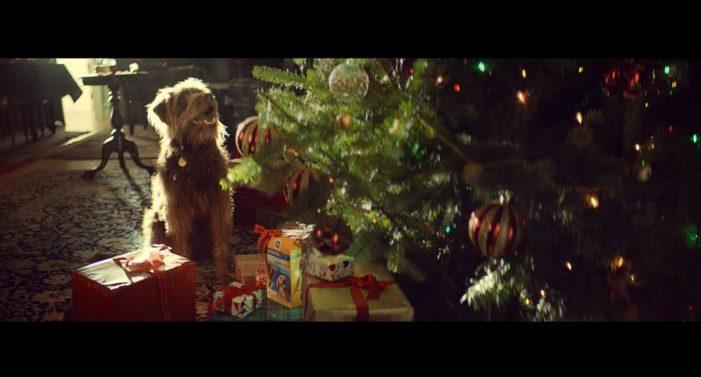 Pedigree Launches 'The Season of Good Dog' – An Annual Holiday Just For Dogs