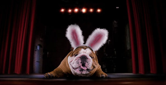 Cadbury Releases Its US Easter Ad Featuring Contest Winner Henri The Bulldog