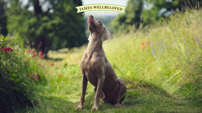 Mars Petcare Supports James Wellbeloved in New Campaign by AMV BBDO