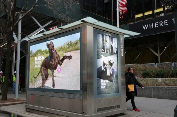 IAMS Campaign Celebrates Uniqueness