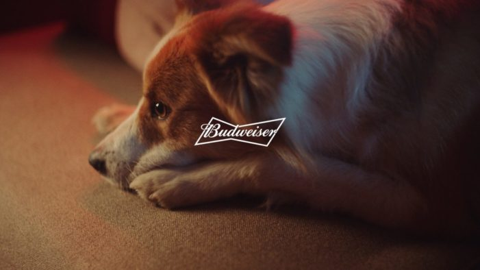 Budweiser responds to requests and returns thrones to pets at the NBA Finals