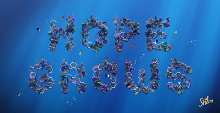 SHEBA® Announces World's Largest Coral Restoration Program in a campaign created by AMV BBDO